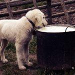 Dog eating
