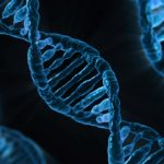 Ancient DNA shows no human population is pure