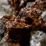 Copper helped ancient animals thrive on Earth