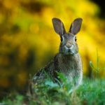 Rabbits love to eat plants high in DNA
