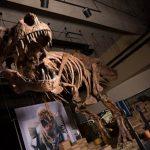 Scientists find biggest Tyrannosaurus rex in the world