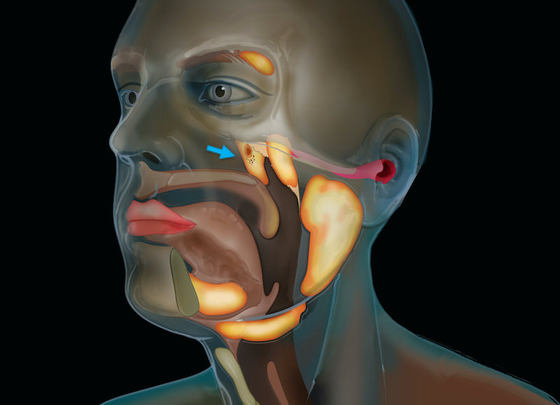 Cancer scientists discover new salivary glands in humans